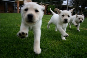 dog2 - puppies